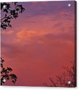 The Pink Sky Acrylic Print