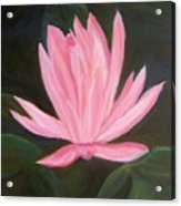 The Pink Water Lily Acrylic Print