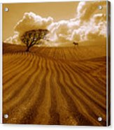 The Ploughed Field Acrylic Print by Mal Bray
