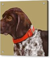 The Pooch With A Red Collar Acrylic Print