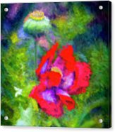 The Poppie Calls Acrylic Print