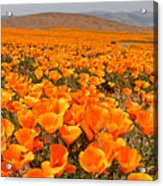 The Poppy Fields - Antelope Valley Acrylic Print