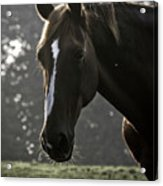 The Portrait Of The Horse Acrylic Print