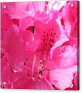 The Power Of Pink Acrylic Print