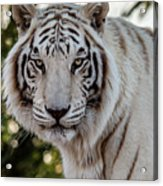 The Power Within Acrylic Print