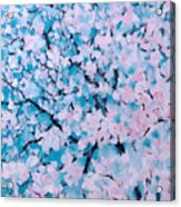 The Pretty Blooming Acrylic Print