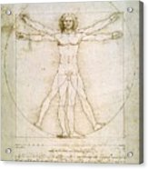 The Proportions Of The Human Figure  Acrylic Print