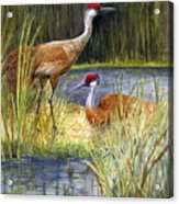 The Protector - Sandhill Cranes Acrylic Print