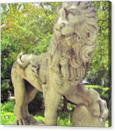 The Proud Lion  Acrylic Print