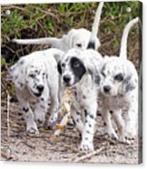 The Puppy's Prize Acrylic Print