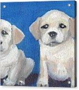 The Pups 2 Acrylic Print