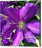 The Purple Sunny Day  Acrylic Print