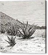 The Pyramid Of The Sun, Teotihuacan Acrylic Print