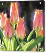 The Queen's Tulips Acrylic Print