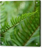 The Quiet Beauty Of Ferns Acrylic Print