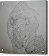 The Raging Rhino Acrylic Print