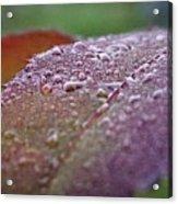 Rain Falls Lightly Acrylic Print