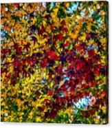 The Rainbow Tree Acrylic Print