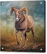 The Ram Acrylic Print