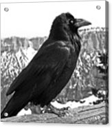 The Raven - Black And White Acrylic Print