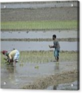 The Real Hero Working In The Field Acrylic Print