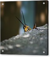 The Real Hopper Acrylic Print