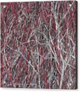 The Red And The Grey Acrylic Print
