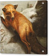 The Red Fox Acrylic Print