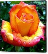 The Red Gold Rose Acrylic Print