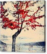 The Red Tree At Okanagan Lake Acrylic Print