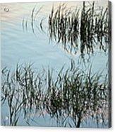 The Reeds Acrylic Print