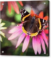 The Regal Red Admiral Acrylic Print