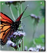 The Reigning Monarch Acrylic Print