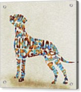 The Rhodesian Ridgeback Dog Watercolor Painting / Typographic Art Acrylic Print