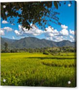 The Rice Fields Of Pai, Thailnad Acrylic Print