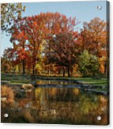 The Rich Autumn Colors In Forest Park. Acrylic Print