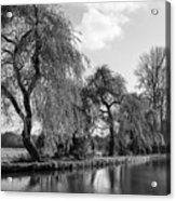The River Wey,guildford, Surrey,england  Acrylic Print