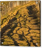 The Road To The Pasture Acrylic Print