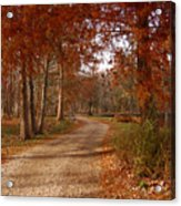 The Road Untraveled Acrylic Print