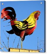 The Rooster . Square . 40d4622 Acrylic Print