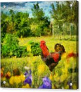 The Rooster's Garden Acrylic Print