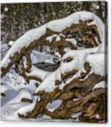 The Roots Of Winter Acrylic Print
