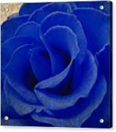 The Rose Of Sadness Acrylic Print