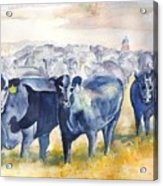 The Round Up Cattle Drive  Acrylic Print