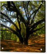 The Sacred Oak Acrylic Print by David Lee Thompson