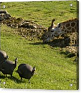 the Safari park Acrylic Print