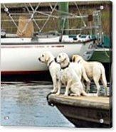 The Sailing Club Acrylic Print