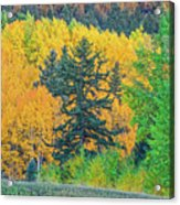 The Sanctity Of Nature Reified Through A Photographic Image  Acrylic Print