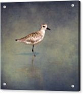 The Sanderling 2 By Darrell Hutto Acrylic Print