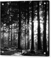 The Sapling Acrylic Print